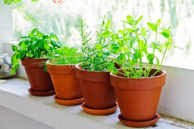 Frisch Aus Dem Topf Urban Gardening Das Beste Gemüse Für Balkon