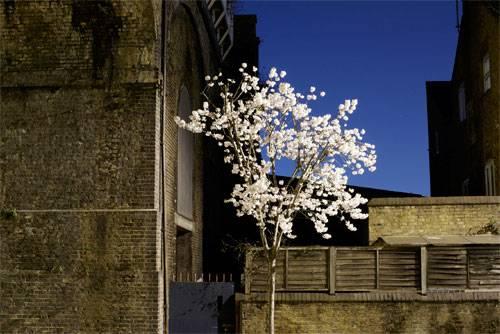 Battersea Blossom