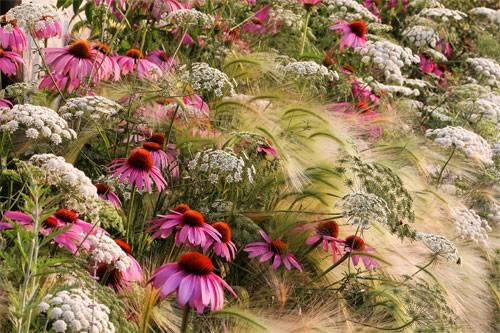 My Garden Prairie