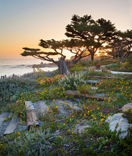 Native Coast