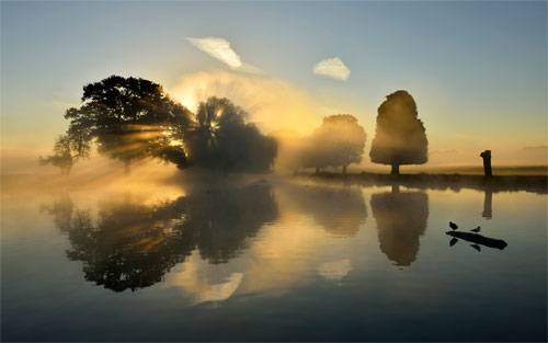 Morning in Bushy Park