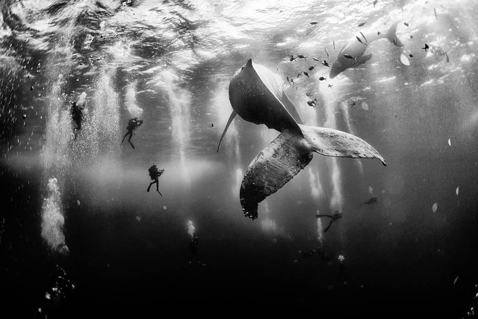 Platz 1: Whale Whisperers, Mexiko
