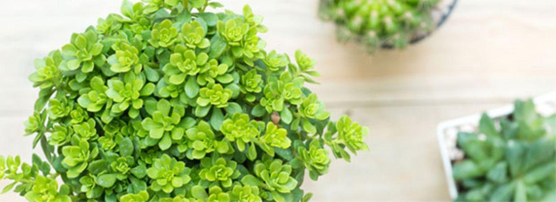 So rettet die Eiswürfel-Methode deine Pflanzen