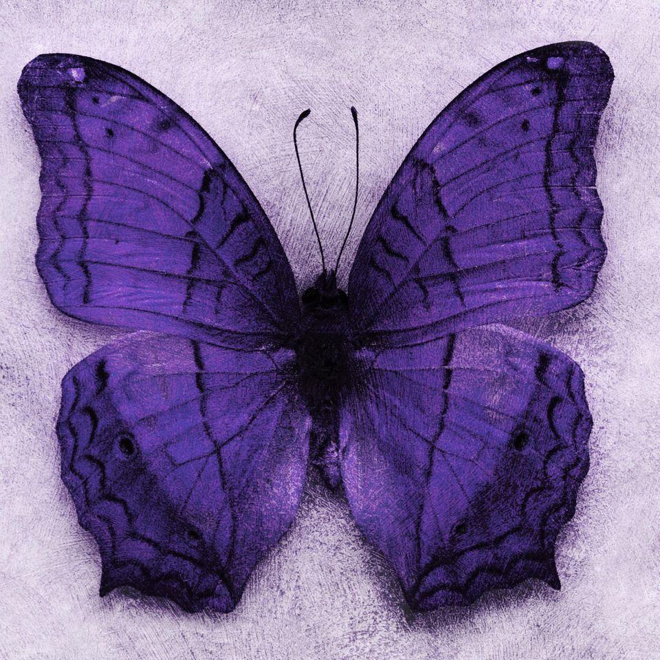Lila Schmetterling: Eine kleine Hilfe für ein schlimmes Schicksal