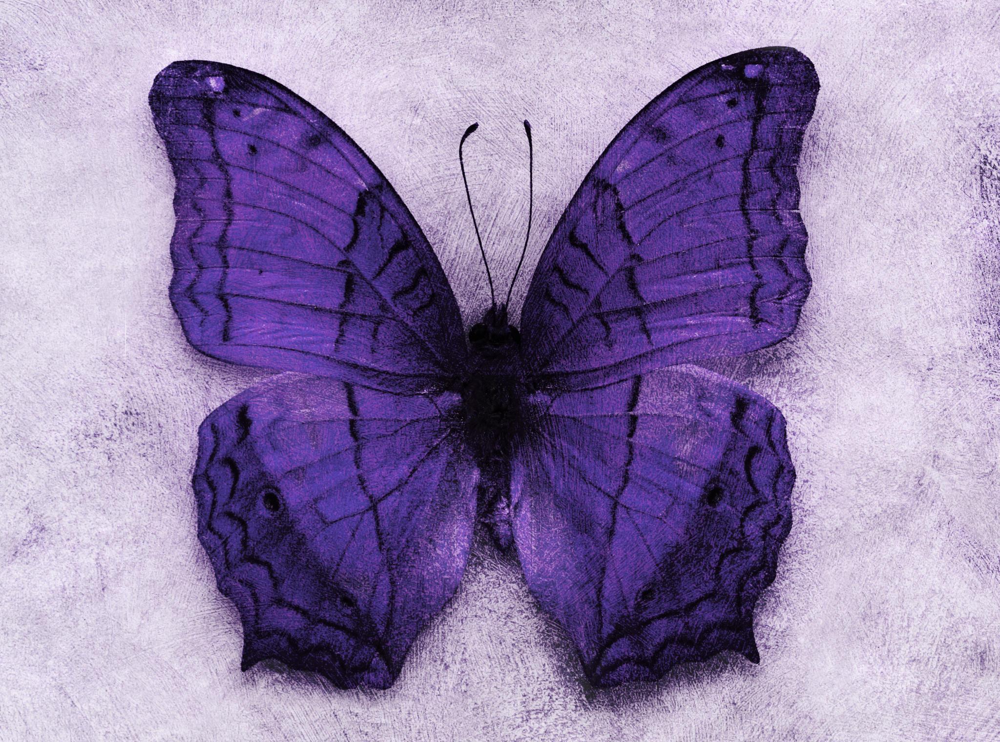 Das Geheimnis der lila Schmetterlinge ist ein furchtbares Kinderschicksal
