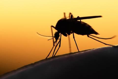 Warum Mücken manche Menschen mehr lieben