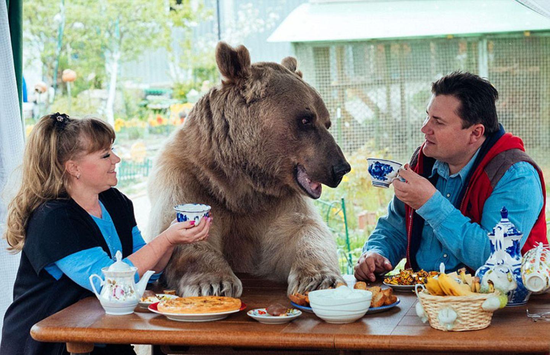 """Als drei Monate junges Bärenbaby wurde der völlig ausgehungerte und verängstigte Stepan im Wald entdeckt. Zum Glück konnten seine neuen """"Eltern"""" Svetlana und Yuriy Panteleeenko aus Moskau das Tier mit viel Liebe und Geduld wieder gesund pflegen - und ihm ganz nebenbei ein neues Zuhause geben. Seit 23 Jahren wohnt Stepan nun mit """"seinen"""" Menschen zusammen, und die Wohngemeinschaft funktioniert ohne jegliche Probleme. Der große Zottelbär ist zu verspielt und verkuschelt um sich daran zu erinnern, dass er eigentlich ein Raubtier ist. Wozu auch? Es ist für ihn viel schöner, auf der gemeinsamen Fernsehcouch herumzulungern, und im Garten Ball zu spielen! Noch mehr Fotos vom Zusammenleben mit Stepan gibt es auf seiner offiziellen Website medvedstepan.ru."""