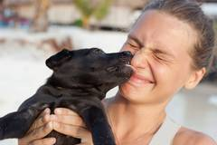 Hunde-Kuss kann krank machen