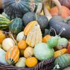Kürbissorten: Kürbisse in allen Formen und Farben