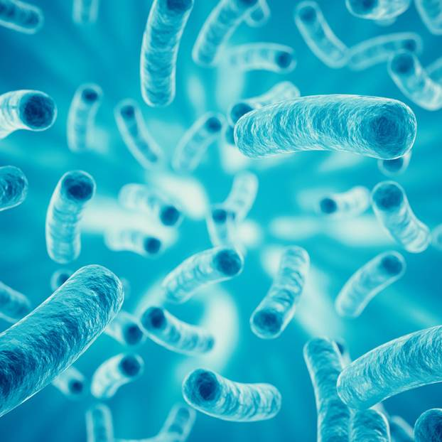 Bakterien Namensliste