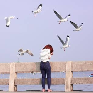 Angst vor Vögeln