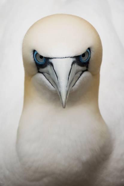 Eugene Kitsios, Netherelands (Open Competition, Wildlife)
