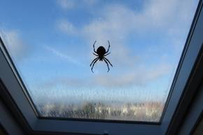 Spinnen loswerden: Spinne am Fenster
