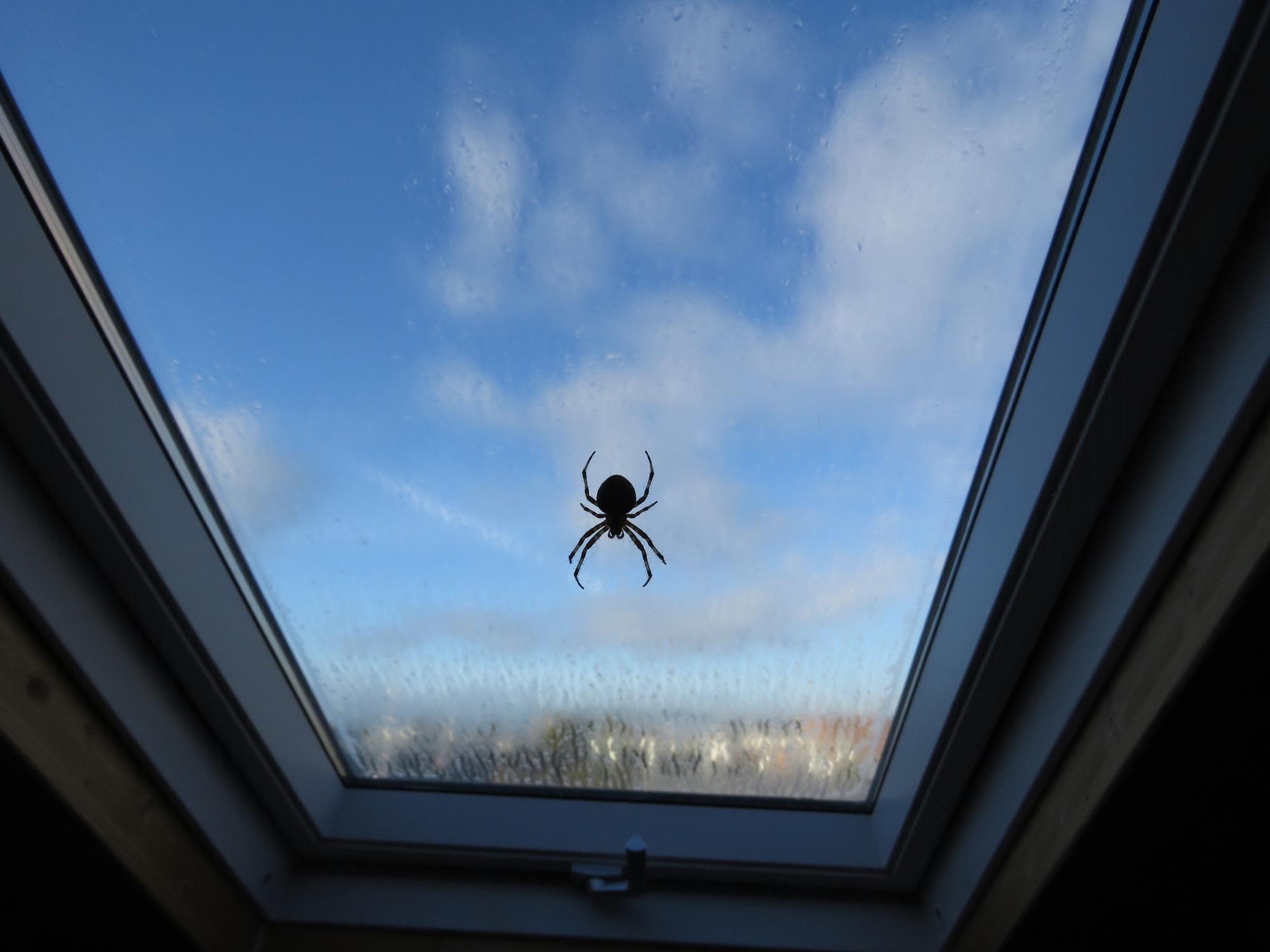 Spinnen Vertreiben Diese Hausmittel Helfen Wirklich Brigitte De