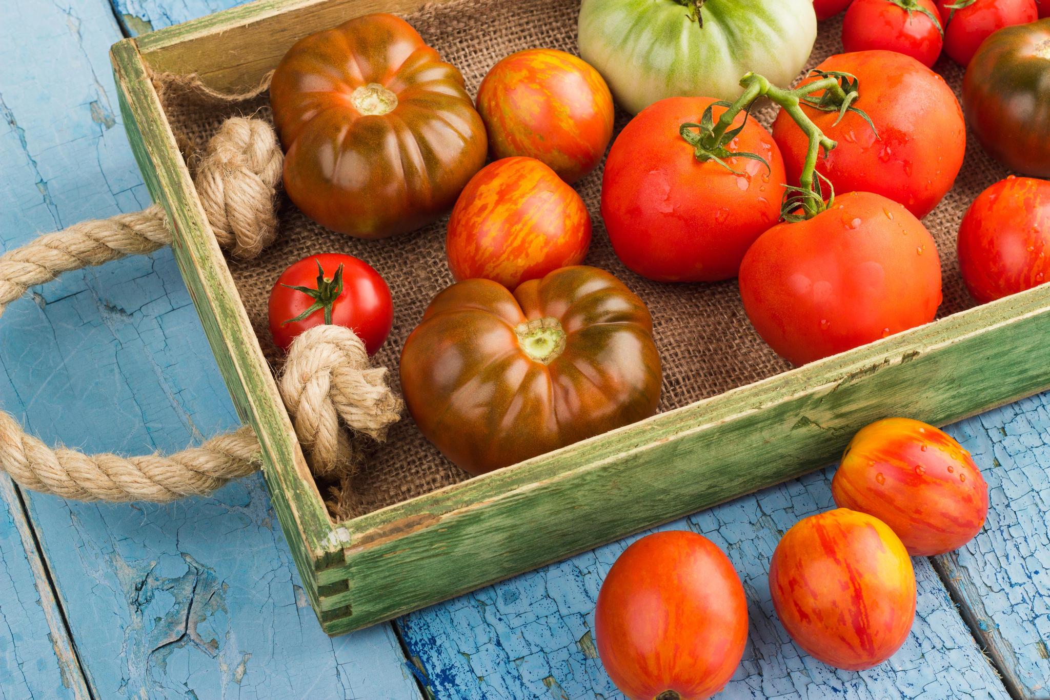 Sommerküche Rezepte : Tomaten rezepte das ist sommer pur brigitte