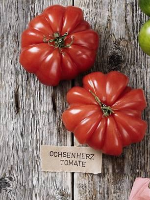 Tomatensorte Ochsenherztomaten