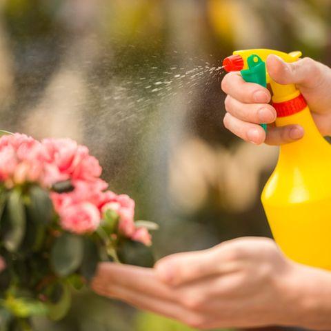 Das solltest du aus deinem Garten verbannen