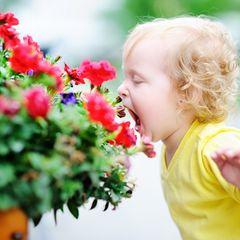 Gartenpflanzen giftig für Kinder