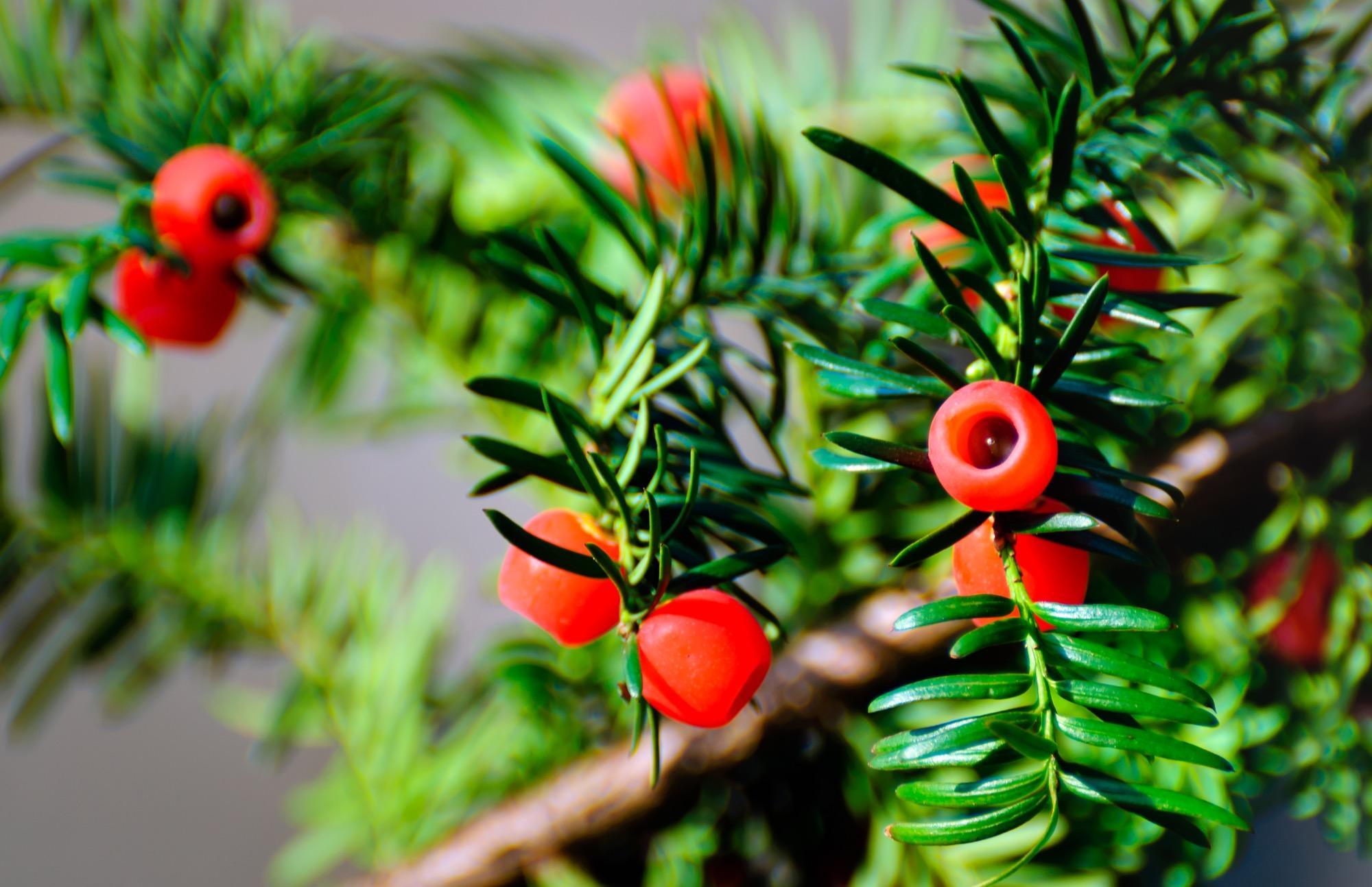 13 Gartenpflanzen tig für Kinder sind