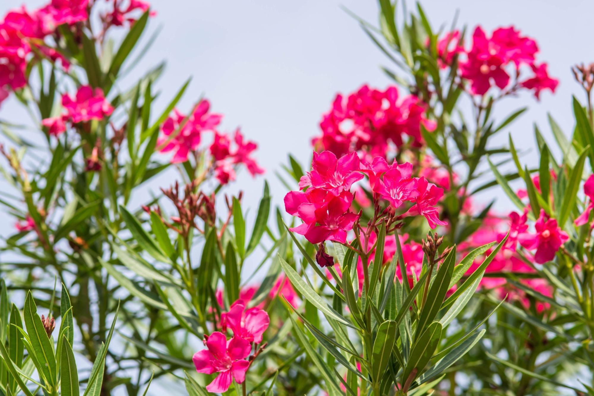 13 gartenpflanzen die giftig f r kinder sind On gartenpflanzen