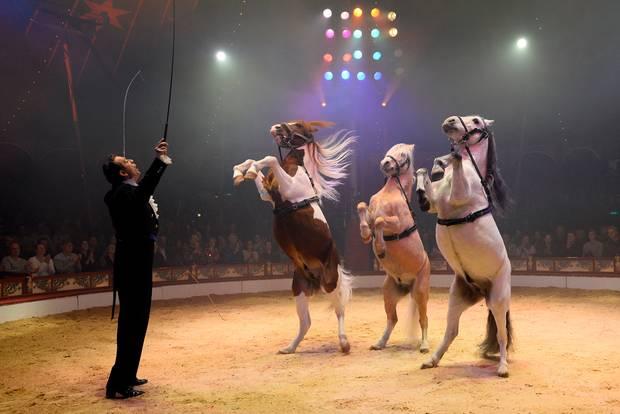 Für diese Entscheidung wird der Zirkus Roncalli gerade von allen gefeiert!