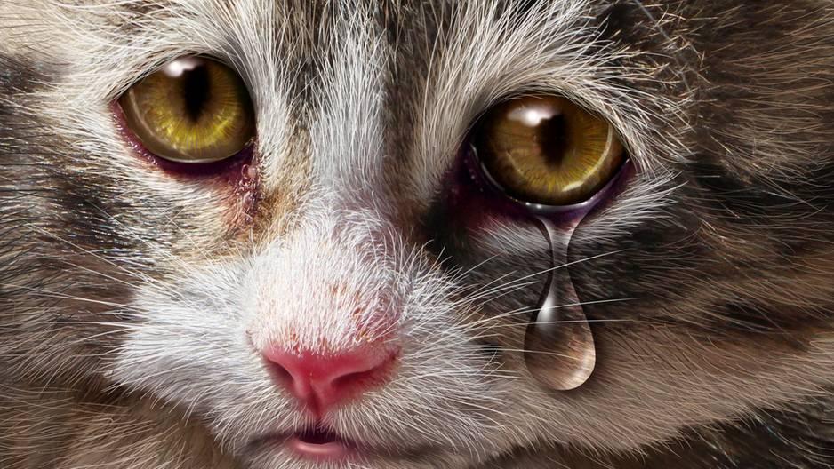 Schlimme Tierquälerei: Katzenbabys mit gelber Farbe misshandelt!