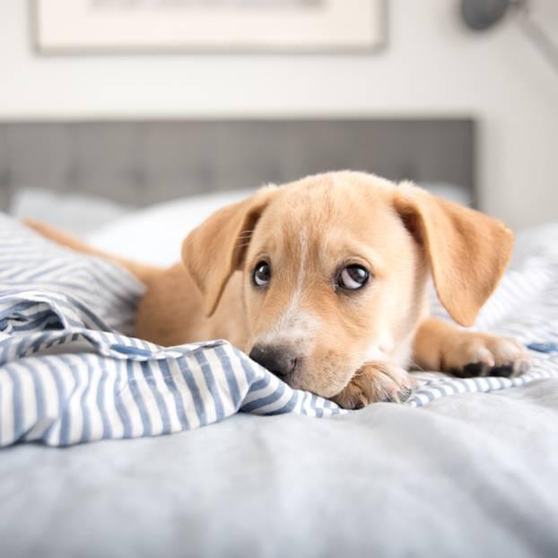 Single frauen und hunde