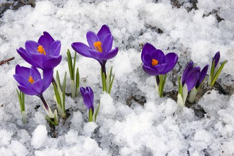 Wetter-Schock: Es schneit nochmal in Deutschland!