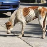 Hund, ausgesetzt