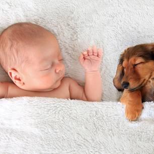 Hund haustier babys