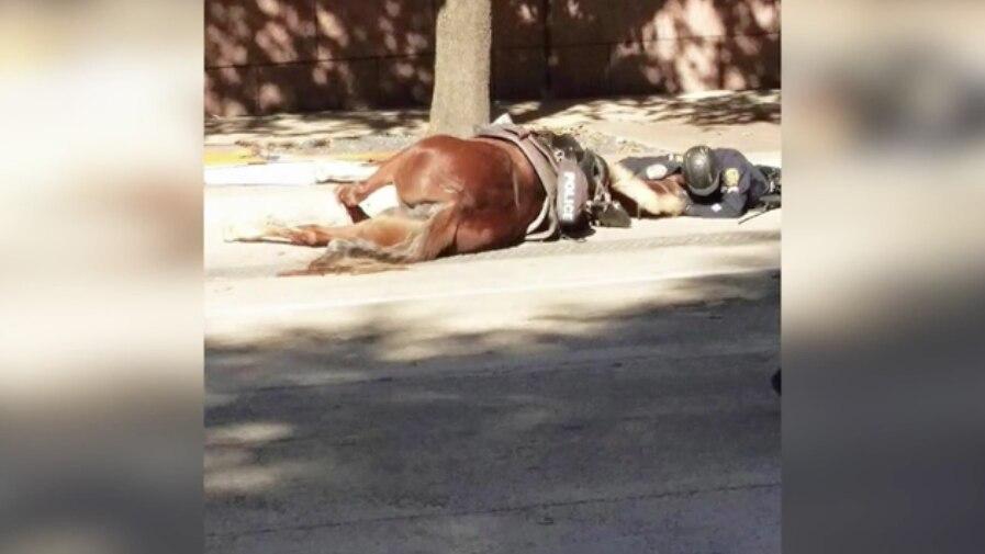 Polizist bleibt bei seinem Pferd bis zum Ende!