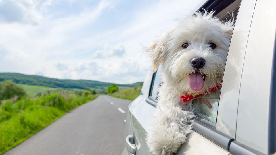 Mit Hund auf Reisen