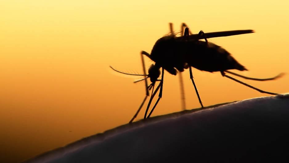 Die ultimative Mückenfalle für den Sommer