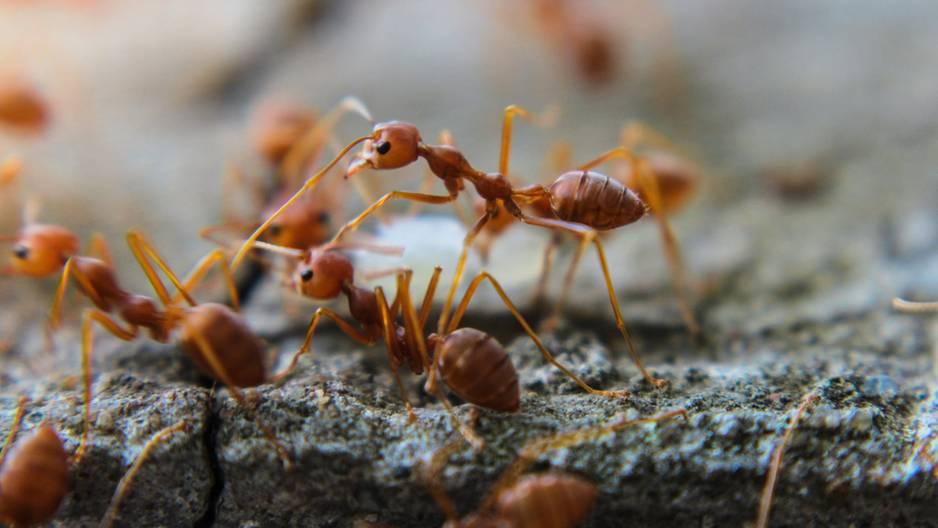 Mittel gegen Ameisen selbermachen - so einfach geht\'s!