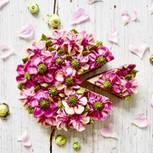 Blütentorten von Instagram bezaubern uns