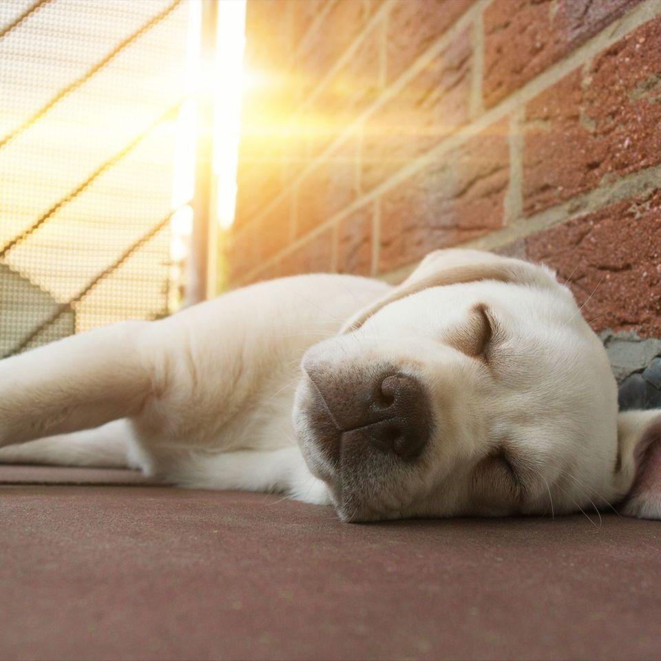 Hund stirbt in praller Sonne auf Balkon