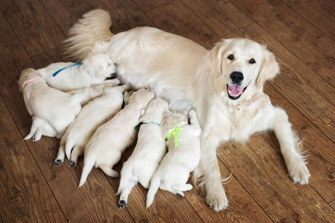Scout LaRue Willis: Welches neue Haustier zieht bald bei ihr ein?