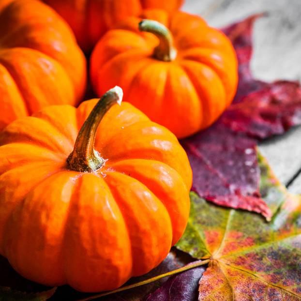 muskatkrbis so schmeckt uns der herbst - Wie Man Einen Kaffeetisch Fr Den Herbst Schmckt