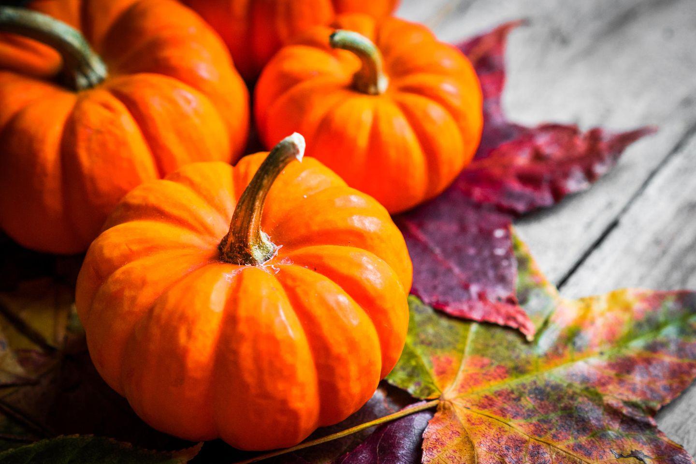 Muskatkürbis: So schmeckt uns der Herbst