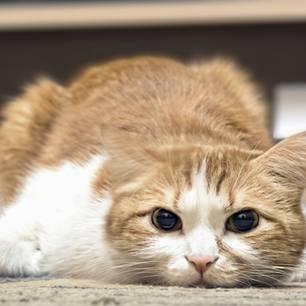 Katze, krank