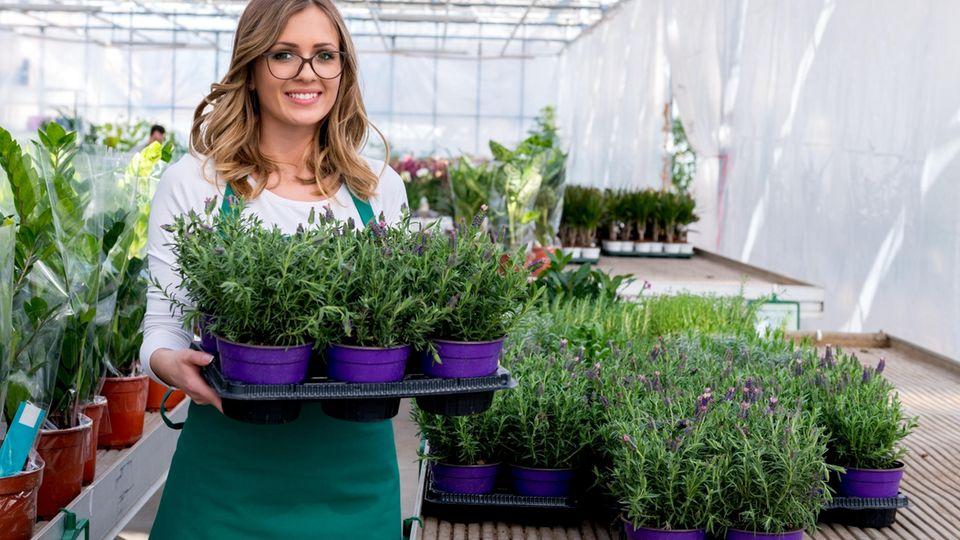 Wohntrend 2019: Diese Pflanze veredelt jeden Raum sofort!