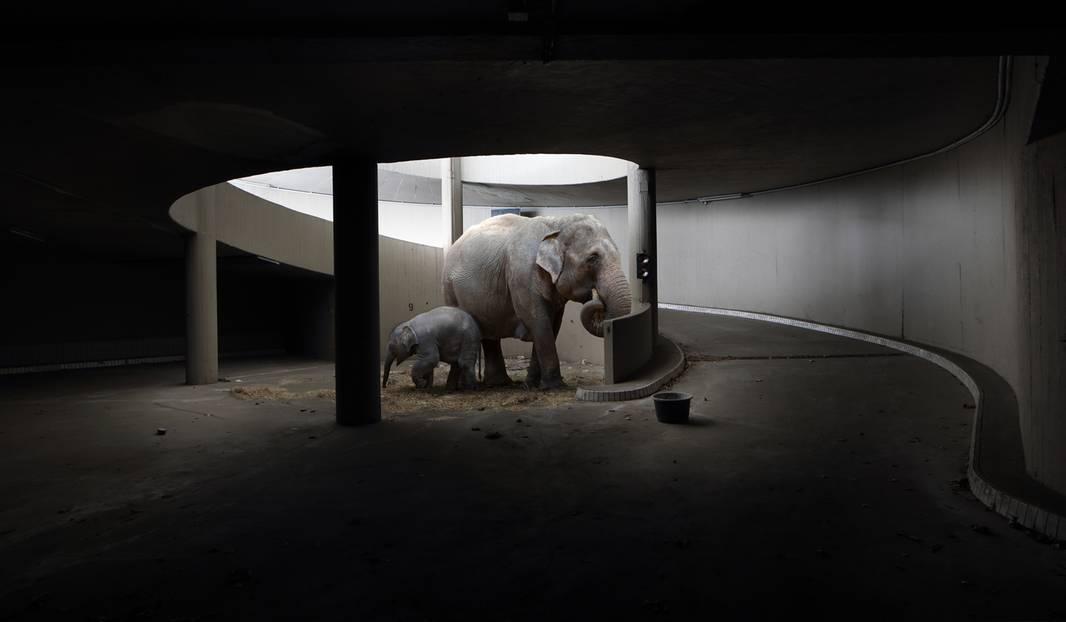Niemandsland - Elefanten