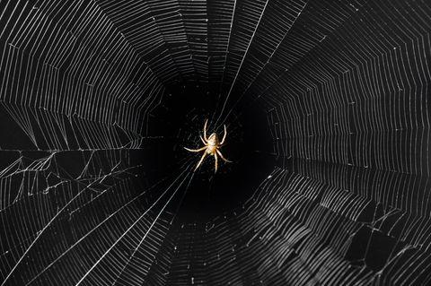 Achtung! Diese Riesen-Spinne breitet sich jetzt in unseren Wohnungen aus