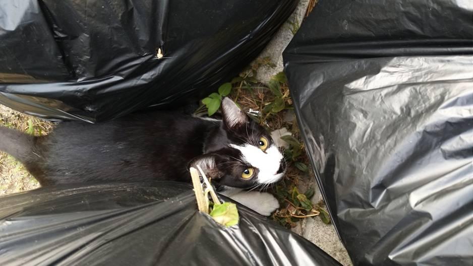 Grausam weggeworfen: Hilflose Katze aus Müllwagen gerettet