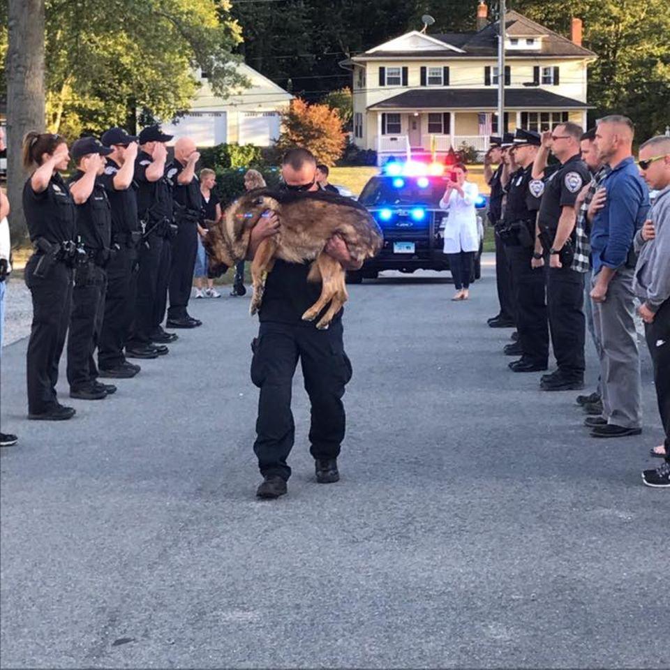 Rührender Abschied: Krebskranker Polizeihund bekommt das letzte Geleit
