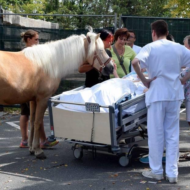 Klinikum Fürth bringt Patientin Pferd ans Sterbebett