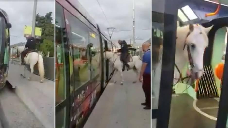Total irre: Darum fuhr dieses Pferd Straßenbahn