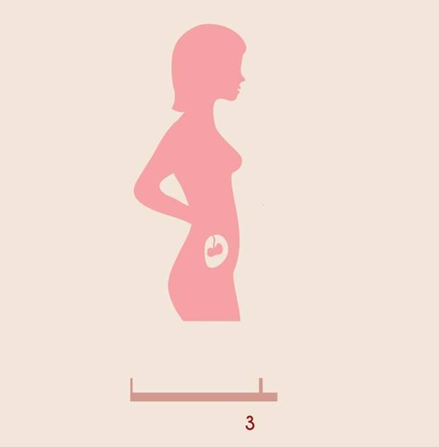 Dritter Schwangerschaftsmonat