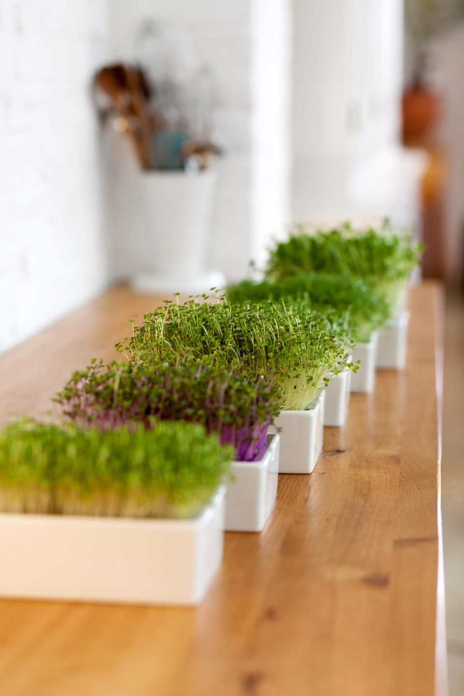 Microgreens sehen toll aus und schmecken köstlich