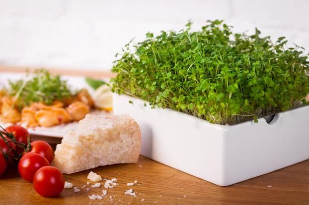 Microgreens bereichern eure Küche